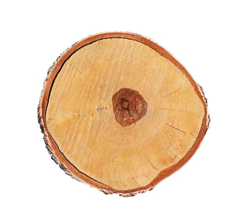 在白色背景隔绝的桦树树干的横断面 免版税库存照片