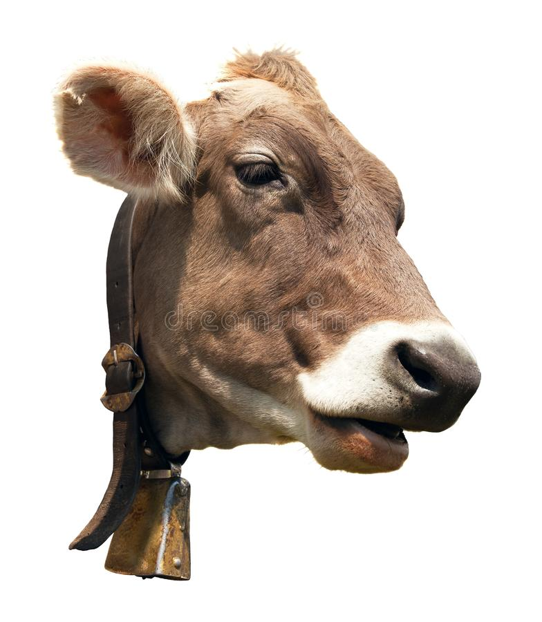 在白色背景隔绝的棕色母牛头 免版税库存图片