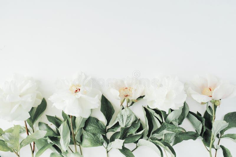在白色背景隔绝的牡丹花 免版税库存照片