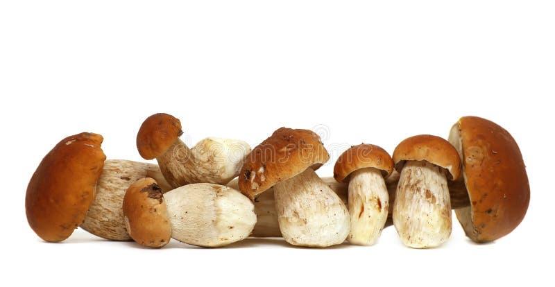 在白色背景隔绝的狂放的被搜寻的蘑菇选择,与阴影 牛肝菌蕈类可食蘑菇 库存图片