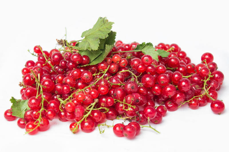 在白色背景隔绝的红浆果和绿色叶子静物画 库存图片