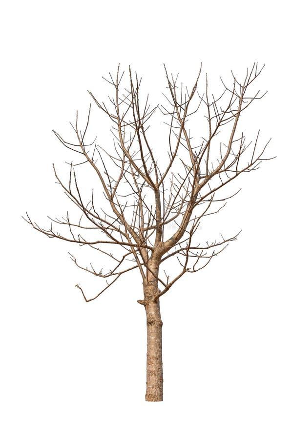 老和死的树 免版税库存照片