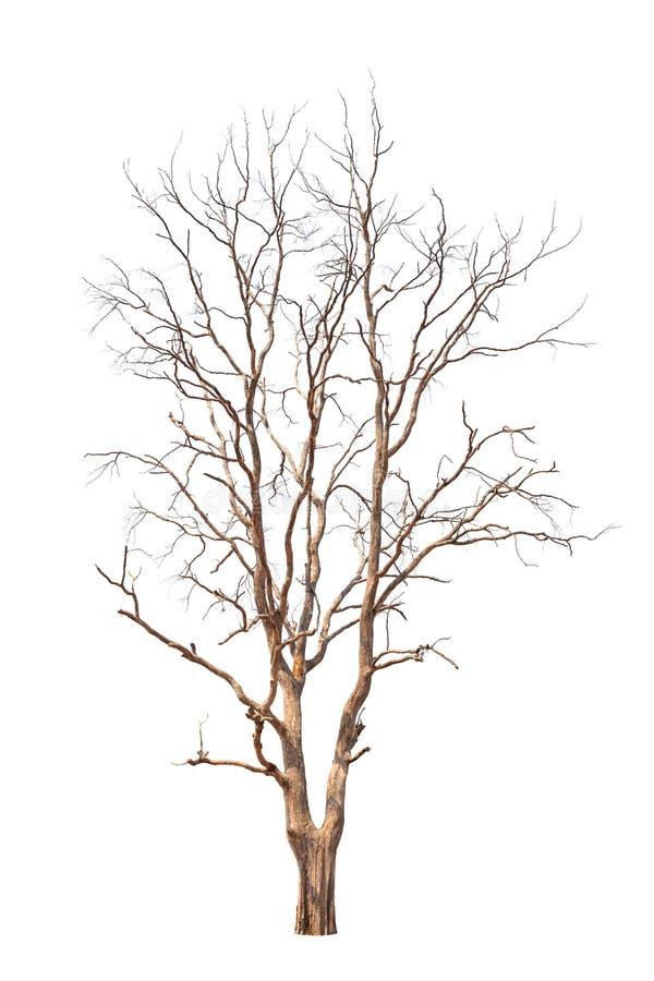 老和死的树 免版税库存图片