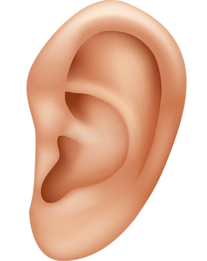 在白色背景隔绝的耳朵人的动画片例证 库存例证