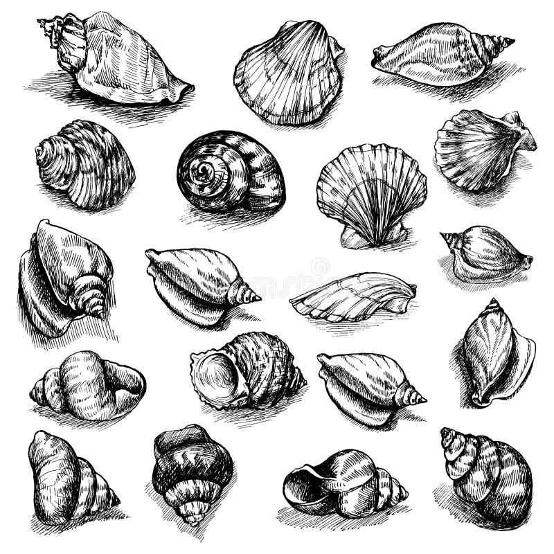 在白色背景隔绝的速写的贝壳的大传染媒介收藏 被设置的手拉的海洋动物 皇族释放例证