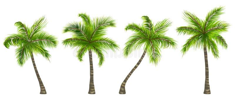 在白色背景隔绝的集合现实棕榈树 向量例证