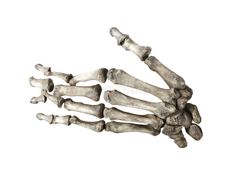 在白色背景隔绝的骨头人的手 免版税库存图片