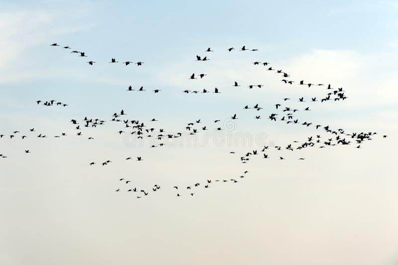 在白色背景隔绝的鸟群  免版税库存图片