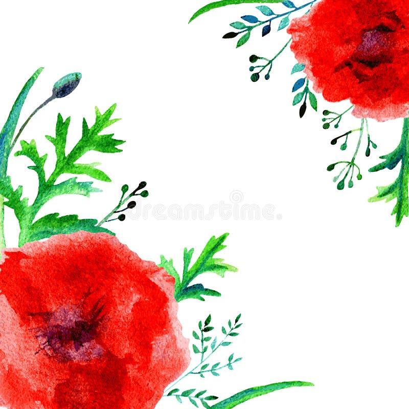 在白色背景隔绝的鸦片红色花水彩例证,装饰框架,手拉的艺术性的传染媒介 向量例证