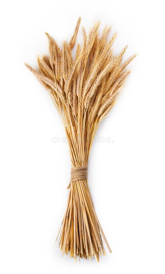 在白色背景隔绝的麦子束的成熟耳朵 免版税库存照片