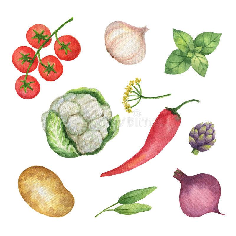 在白色背景隔绝的水彩集合菜和草本 向量例证