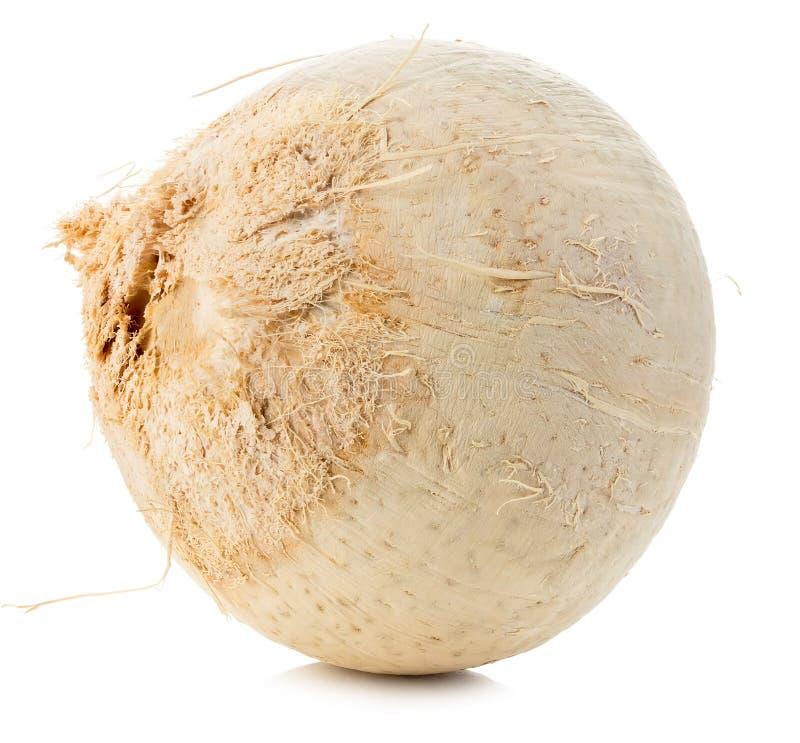 在白色背景隔绝的年轻甜椰子特写镜头 免版税图库摄影
