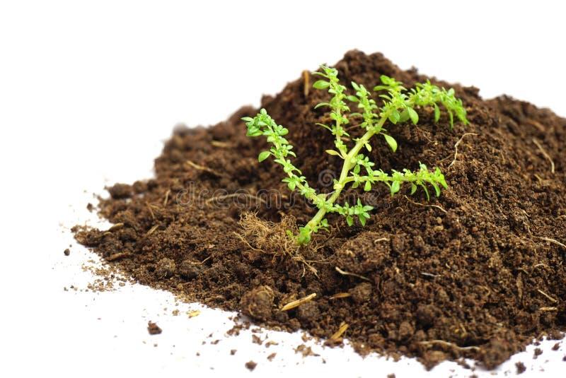在白色背景隔绝的绿色植物和土壤 免版税库存照片
