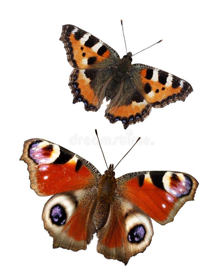 在白色背景隔绝的蝴蝶 设置蝴蝶 免版税库存图片
