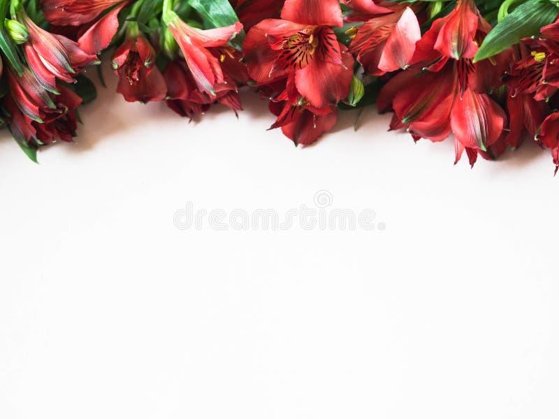 在白色背景顶视图的红色德国锥脚形酒杯花边界 免版税库存照片