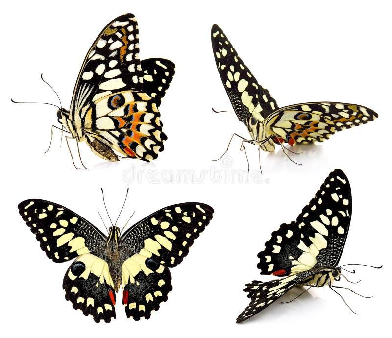 在白色背景蝴蝶隔绝的套 免版税库存照片