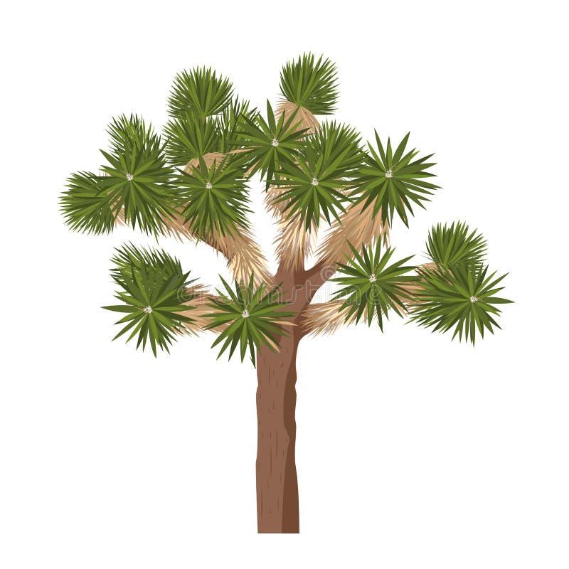 在白色背景-隔绝的约书亚树 丝兰brevifolia 皇族释放例证