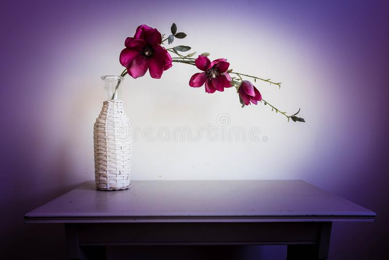 在白色花瓶的紫罗兰色兰花花 库存图片