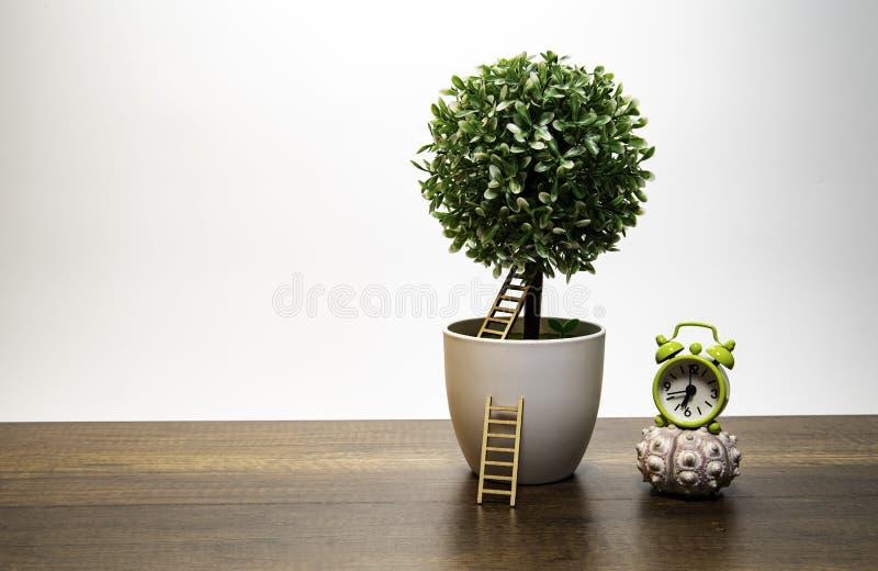 在白色花盆的绿色灌木树与梯子和绿色闹钟 免版税库存照片
