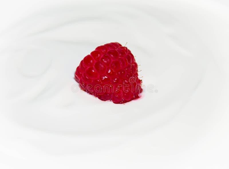 在白色酸奶关闭的成熟水多的莓莓果 库存照片