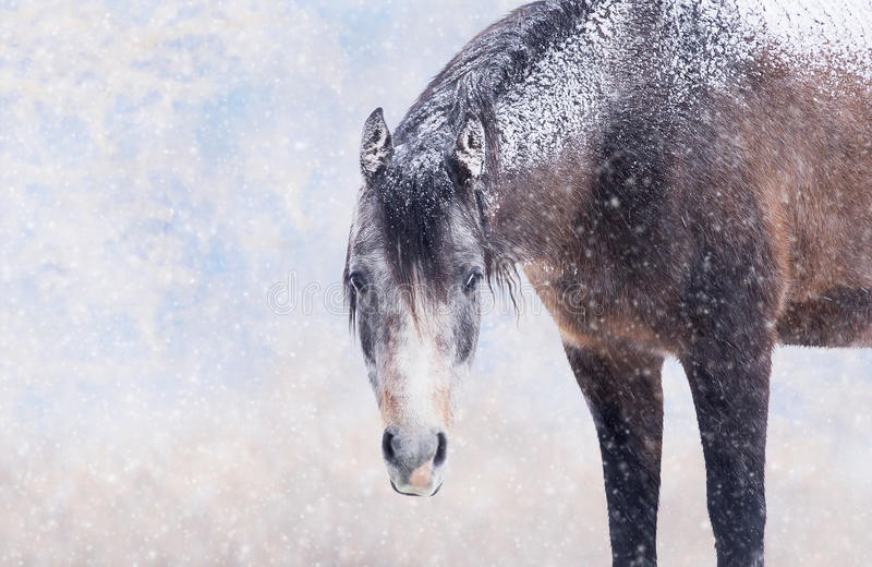 在白色降雪的布朗马 免版税库存照片