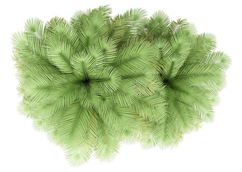 在白色隔绝的两棵可可椰子树 r 向量例证