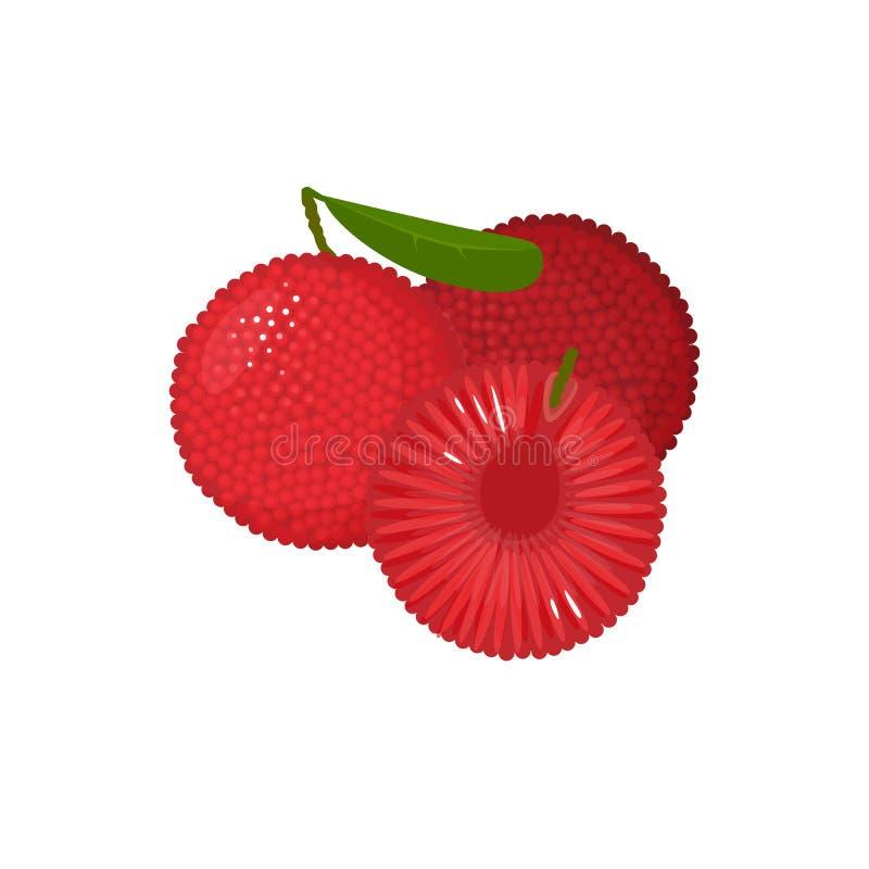 在白色隔绝的动画片新鲜的yumberry果子 皇族释放例证