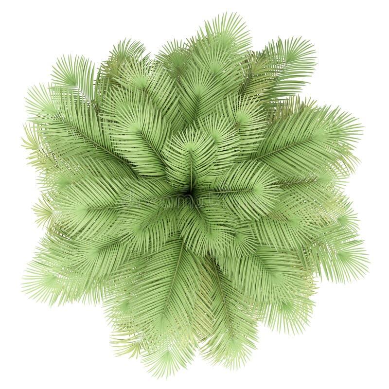 在白色隔绝的可可椰子树 r 库存例证