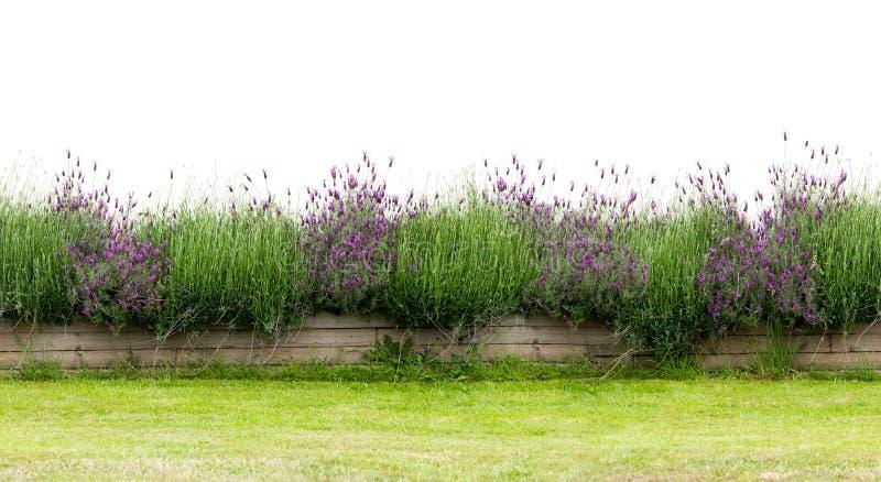 在白色隔绝的小花树篱 无缝的不尽的样式 免版税库存图片