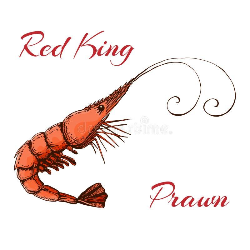 在白色隔绝的手拉的被刻记的墨水虾或大虾例证 现实虾色的剪影  传染媒介红色国王大虾 皇族释放例证