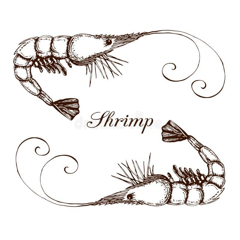 在白色隔绝的手拉的被刻记的墨水虾或大虾例证 被铭刻的海鲜图表 现实虾概述剪影  皇族释放例证