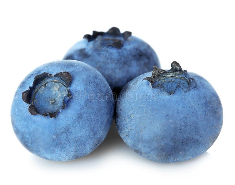 在白色隔绝的新鲜的成熟蓝莓特写镜头 图库摄影