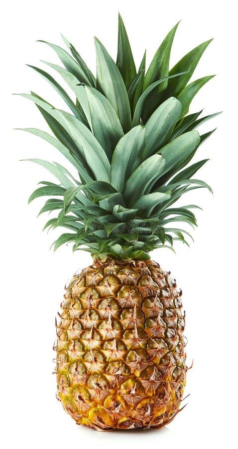 在白色隔绝的新鲜的整个菠萝 库存图片