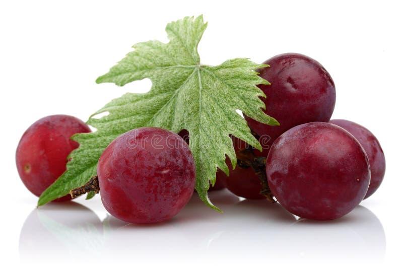 在白色隔绝的新鲜的红葡萄 库存图片