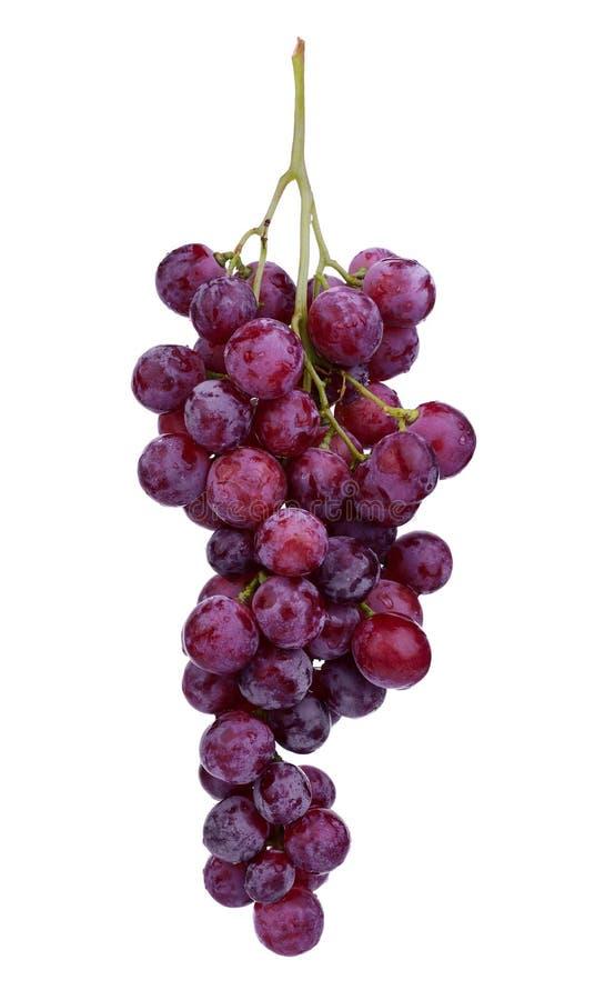在白色隔绝的新鲜的红葡萄 图库摄影