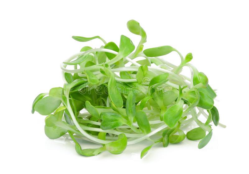 在白色隔绝的新鲜的绿色年轻向日葵新芽 图库摄影