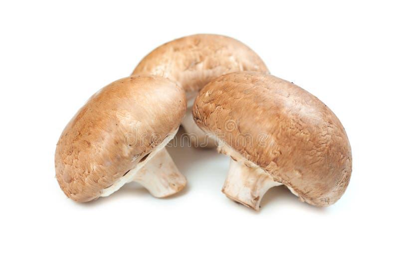 在白色隔绝的新鲜的蘑菇蘑菇 健康食品构想 库存照片