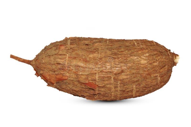 在白色隔绝的木薯根 库存照片