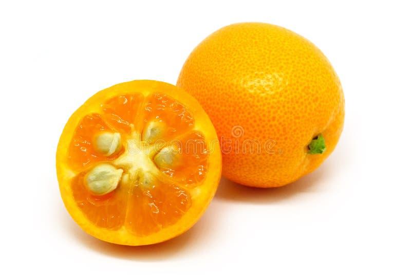 在白色隔绝的柑橘金桔 库存图片