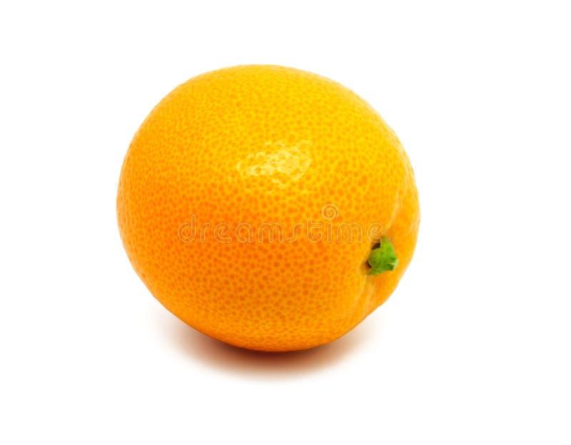 在白色隔绝的柑橘金桔 图库摄影