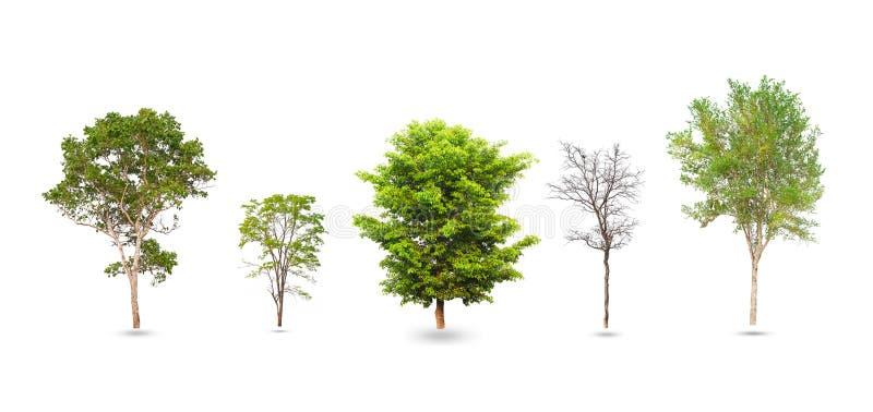 在白色隔绝的树的汇集 免版税库存图片