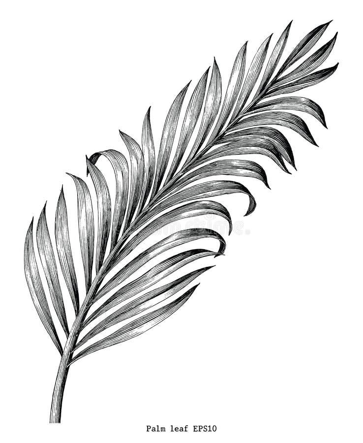 在白色隔绝的棕榈叶手凹道葡萄酒板刻剪贴美术 向量例证