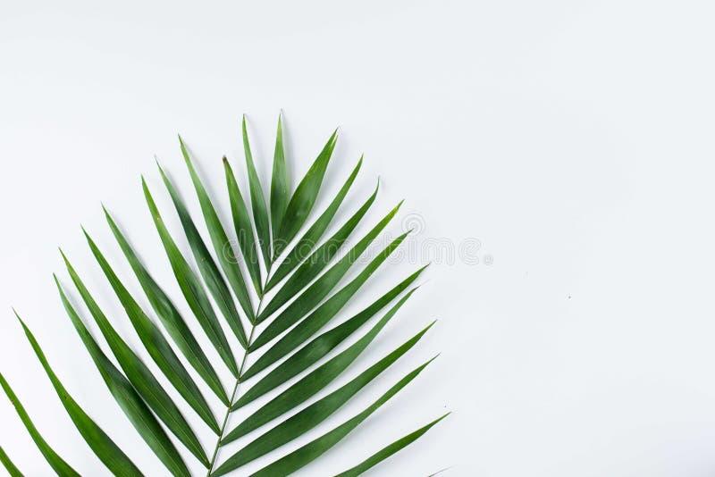 在白色隔绝的热带叶子 与拷贝空间的夏天背景 r 库存照片