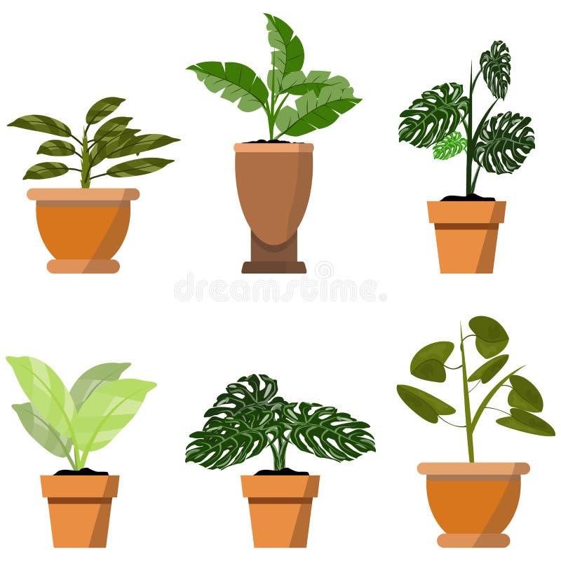 在白色隔绝的盆的植物 传染媒介套罐例证的六个绿色热带植物 向量例证