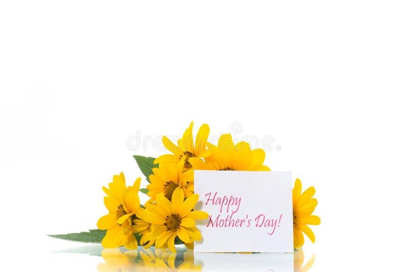 在白色隔绝的美丽的开花的黄色雏菊花束  库存照片