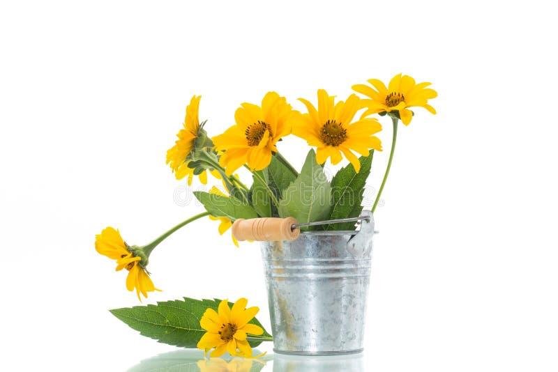 在白色隔绝的美丽的开花的黄色雏菊花束  免版税库存照片