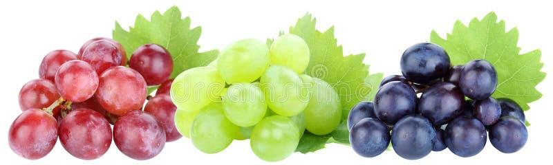 在白色隔绝的葡萄连续葡萄红色果子果子 免版税库存照片