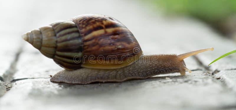 在白色隔绝的蜗牛 免版税库存照片