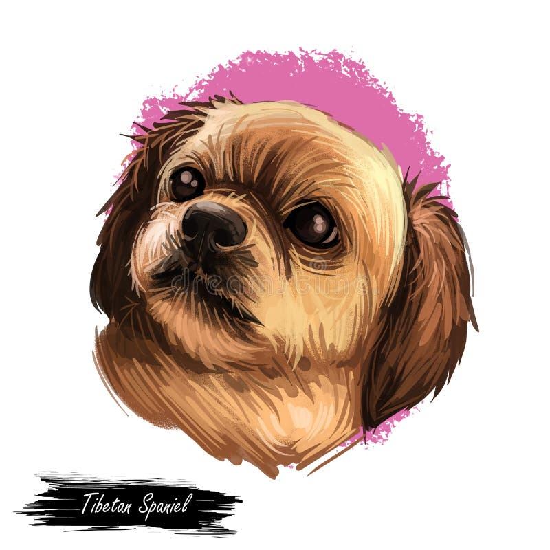 在白色隔绝的西藏西班牙猎狗狗品种画象 数字艺术例证,手拉的小狗动物水彩图画为 库存例证