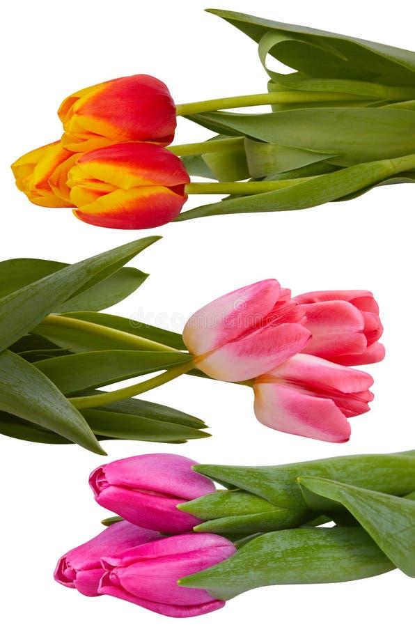 在白色隔绝的设置不同的郁金香花花束 图库摄影